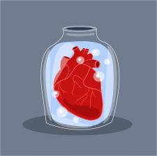 Векторна ілюстрація (серце)