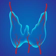 щитовидная железа, иконка