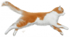 Рыжий, пушистый кот
