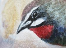 Птаха2