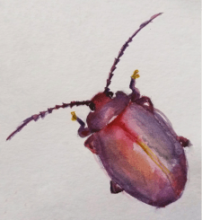 Нежный, красивый жук.