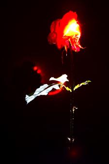 лазерная роза