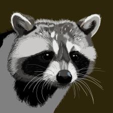 Raccoon принт на зошити