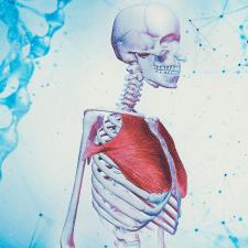 иллюстрация-анатомия