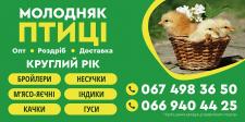 Молодняк птиці - постер для рекламы