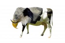 Животное 1