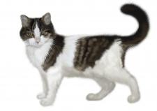 Кошка Мисси