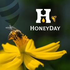 Логотип HoneyDay