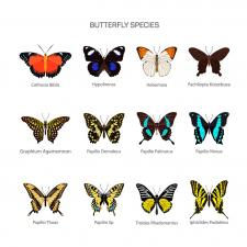 бабочки вектор
