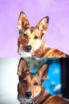 Портрет животного по фото