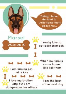 инфографикка для собаки
