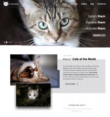 Сайт посвященный кошкам