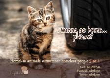 Социальная реклама, защита животных