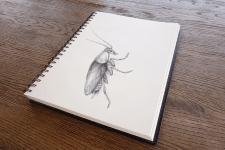 Иллюстрации к книге Ф. Кафка «Превращение» 2