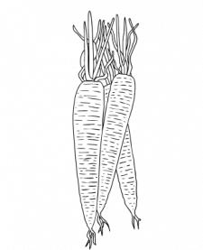 морковь вектор графика перо