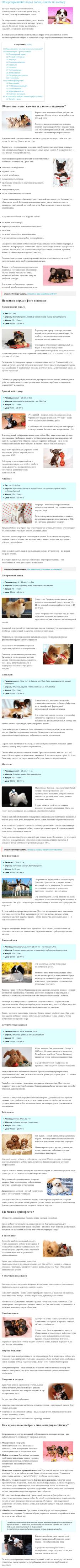 Обзор карманных пород собак, советы по выбору