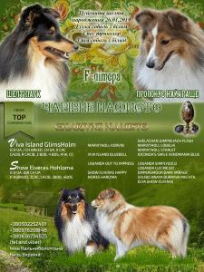 Презентация щенков