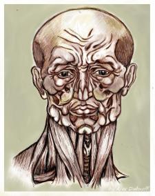 St.Bartholomew facial anatomy