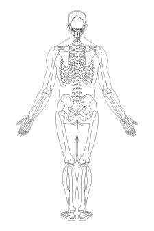 Отрисовка скелета(Вид сзади)