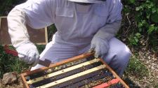Стамески пчеловода