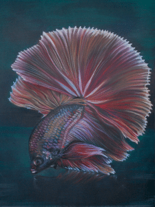"""пастель """"Сиамская рыбка"""""""