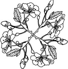 цветы нарисованные черным цветом на белом фоне