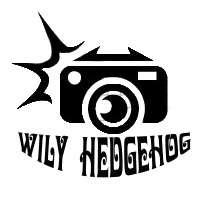Wily Hedgehog