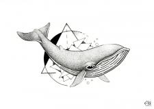"""Иллюстрация """"Свободнай кит"""""""