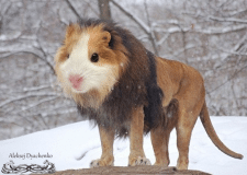 Редкое животное