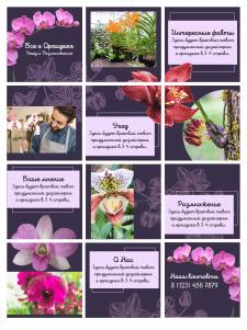 Инстаграм - Орхидеи