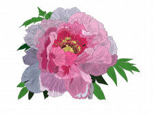 Цветок в векторной графике отрисованный по фото
