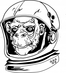 Illustrations | Sketch| Monkey
