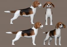 лоупольная модель, собака бигль