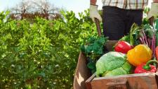 Урожай на зависть соседям!