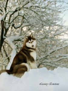 Фотосъемка животных
