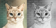 Реалистичный портрет котика