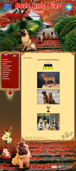 Сайт под ключ на cms WordPress