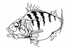 Иллюстрация (вектор, заказ)