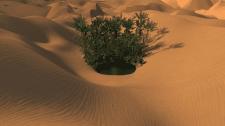 an oasis among the dunes
