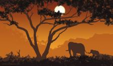 Elephants // Быстрый скетч 30 мин.