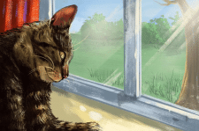 Окно и котик