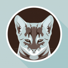 "Time for illustration ""Cat"""