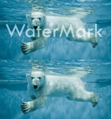 Ретушь_водяной знак