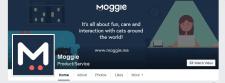 """Контент для страницы стартапа """"Moggie"""""""