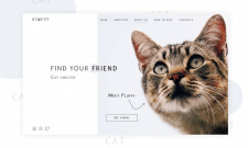 Cat Shelter Concept