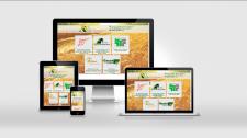 Разработка дизайна и сайта