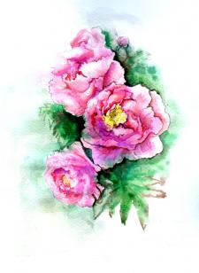 Пионы - царственные цветы