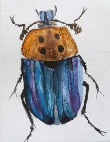 Акварельный жук