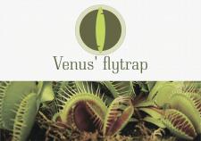 Логотип для магазина венериных мухоловок
