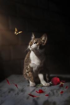 Худ. обработка и ретушь фото животного